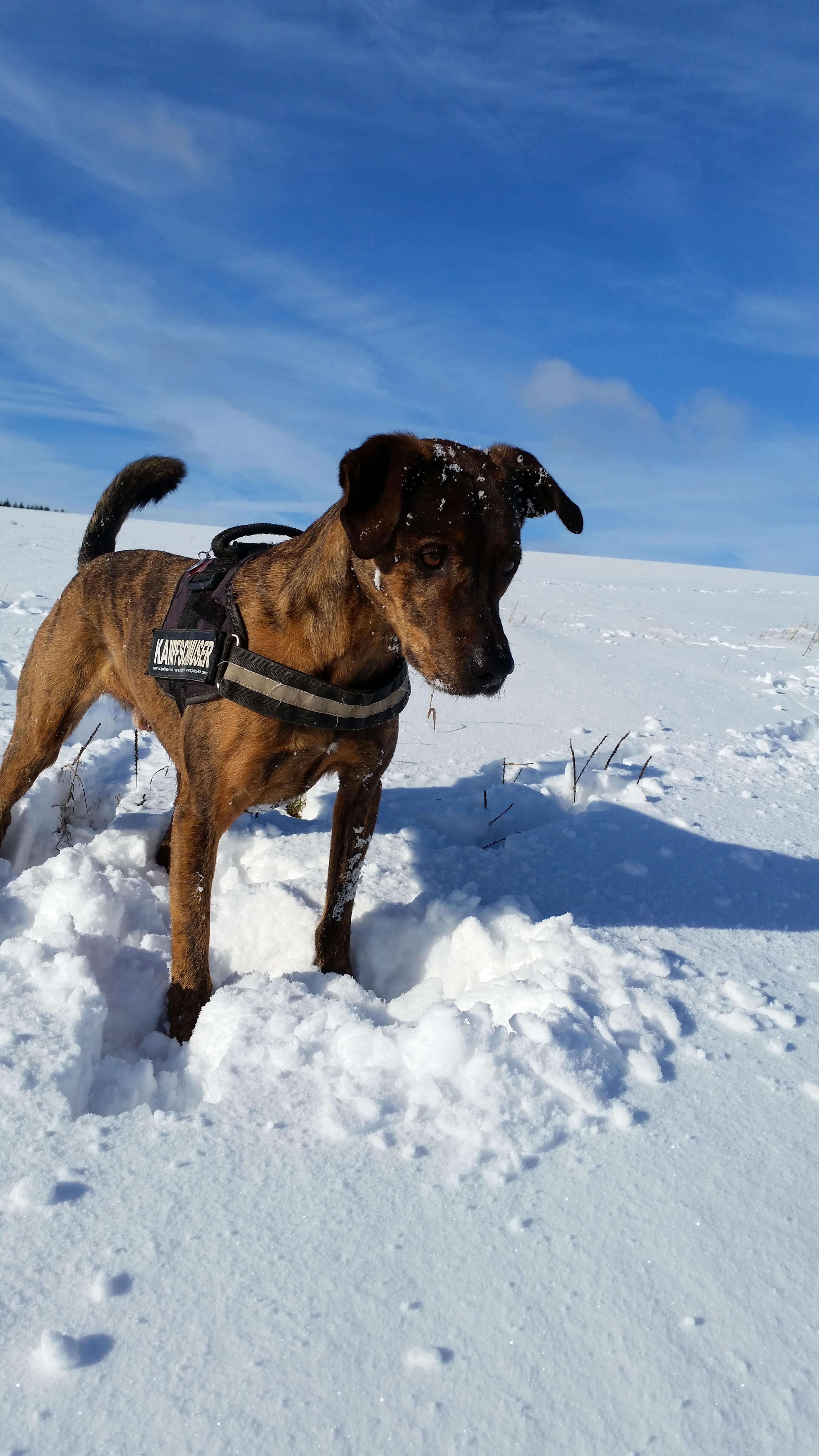 Hund Rumänien Erfahrungen
