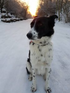 adoption-hund-rumaenien-bella
