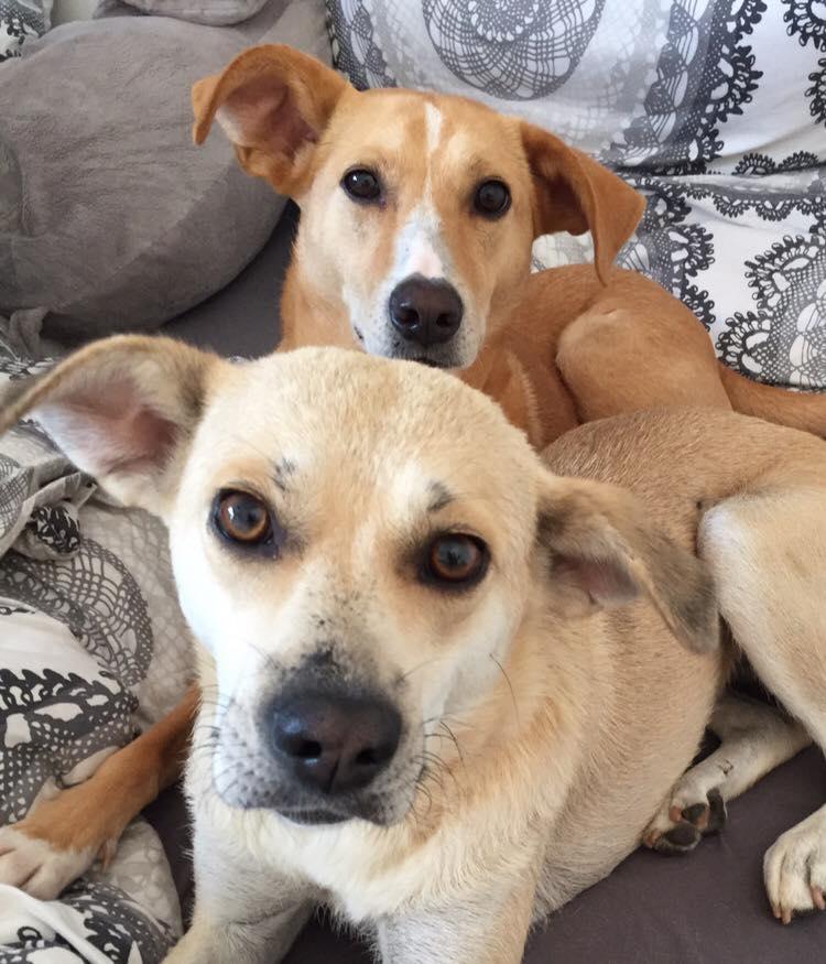 erfahrung adoption hund rumaenien das hundemagazin mit herz. Black Bedroom Furniture Sets. Home Design Ideas