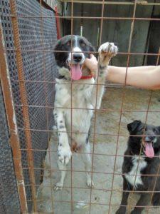 erfahrung-adoption-hund-rumaenien