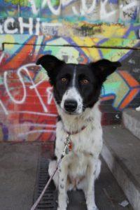 erfahrungsbericht-adoption-hund-rumaenien