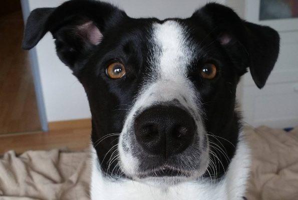 Hunde Rumänien
