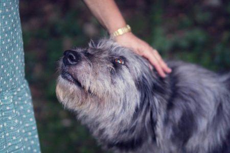 hunde-adoptieren
