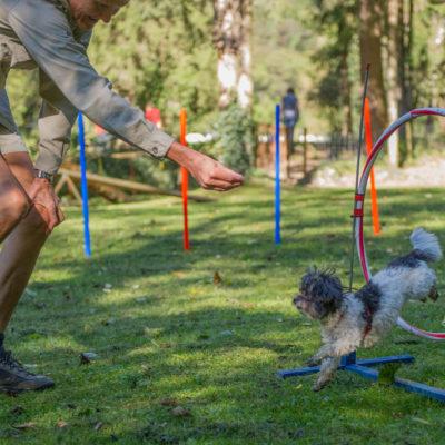 hundehotel-hundetraining