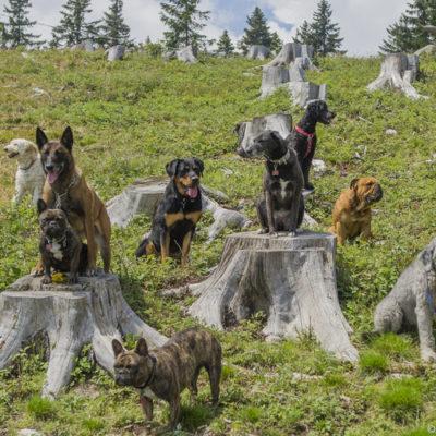 hundehotel-norditalien
