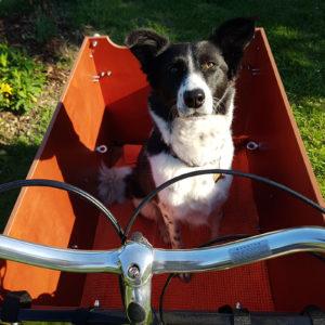 lastenrad-babboe-dog