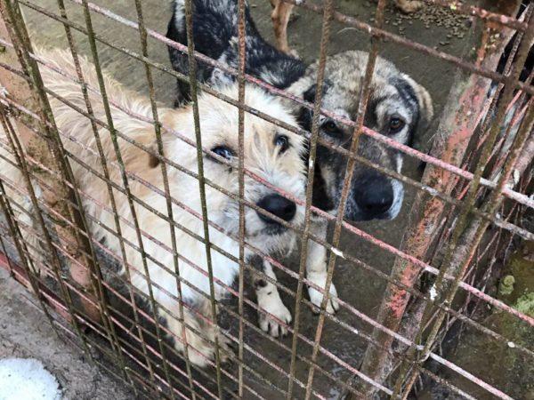 Resita Tierheim Rumänien